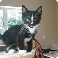 Adopt A Pet :: Louie MC8346 - Burlington, WA