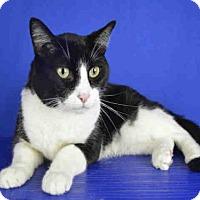 Adopt A Pet :: GIGET - Norman, OK