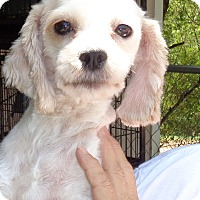 Adopt A Pet :: Sissy - Crump, TN
