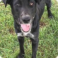 Adopt A Pet :: Otter - Texico, IL