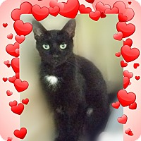 Adopt A Pet :: Beauty -Very Conective - Ocala, FL