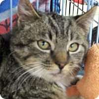 Adopt A Pet :: Bobby - Castro Valley, CA