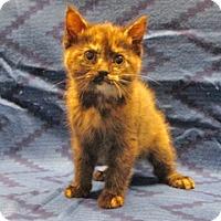 Adopt A Pet :: 16-c12-013 Gabby - Fayetteville, TN