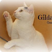 Adopt A Pet :: Gilda - Springfield, PA