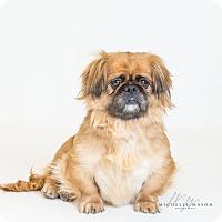 Adopt A Pet :: Rhonda - Naperville, IL
