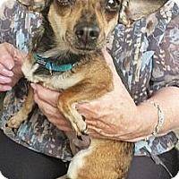 Adopt A Pet :: Betty - Long Beach, CA