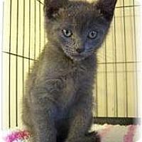 Adopt A Pet :: Kevin - Shelton, WA