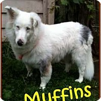 Adopt A Pet :: Muffins - Indiana, IN