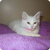 Adopt A Pet :: Scharlotte - Medina, OH