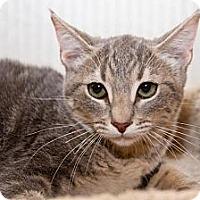 Adopt A Pet :: Destiny - Irvine, CA