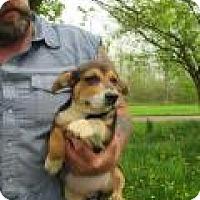 Adopt A Pet :: Juji - Kendall, NY
