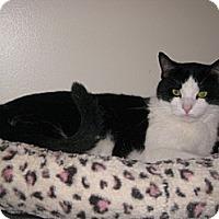 Adopt A Pet :: Frisco - Bloomsburg, PA