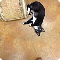 Adopt A Pet :: Baby - Lake Charles, LA