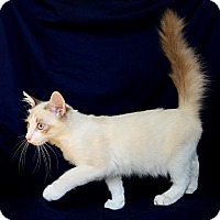 Adopt A Pet :: Atticus - Davis, CA