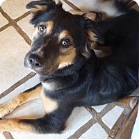 Adopt A Pet :: BAILEY - Paron, AR