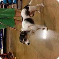 Adopt A Pet :: Daisy - Edmond, OK
