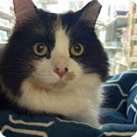 Adopt A Pet :: Sarah Bella - Scottsdale, AZ