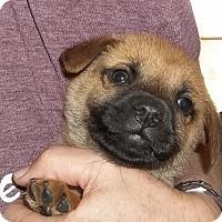 Adopt A Pet :: Prizzi - Memphis, TN