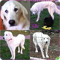 Adopt A Pet :: Ellie - Kyle, TX