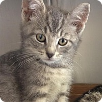 Adopt A Pet :: Katie - East Brunswick, NJ