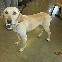 Adopt A Pet :: QUASI - LaGrange, KY