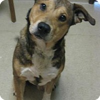 Adopt A Pet :: Buster - Gary, IN
