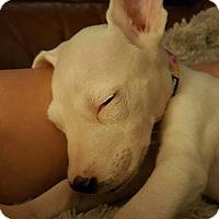 Adopt A Pet :: Hazel - Windermere, FL