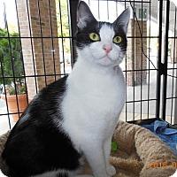 Adopt A Pet :: Dahlia - Herndon, VA