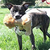 Adopt A Pet :: Alfie @DCAC - Wyandotte, MI