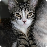 Adopt A Pet :: Cole - South Saint Paul, MN