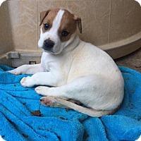 Adopt A Pet :: Marnie - Charlotte, NC