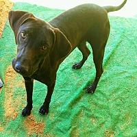 Adopt A Pet :: Jett  #1 - Graceville, FL
