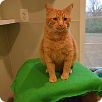 Adopt A Pet :: Taco - St. Charles, MO