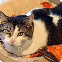 Adopt A Pet :: Oscar - Lincoln, NE