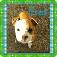 Adopt A Pet :: FRED AND RICKY - HAGGERSTOWN, MD