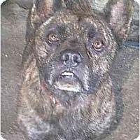 Adopt A Pet :: Jingles - dewey, AZ