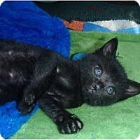 Adopt A Pet :: Taylor - Manalapan, NJ