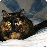 Adopt A Pet :: Cinnamon - Norwich, NY