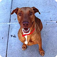 Adopt A Pet :: Kona SUPER URGENT!! - Sacramento, CA