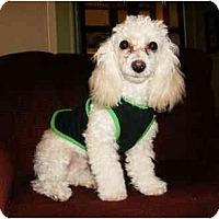 Adopt A Pet :: Benjamin - Mooy, AL