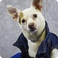 Adopt A Pet :: Bronco - Medora, IN