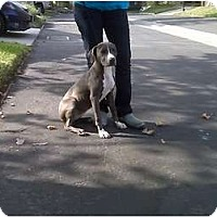 Adopt A Pet :: Annie - Sunnyvale, CA