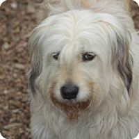 Adopt A Pet :: Clifford - Norwalk, CT