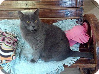 Domestic Shorthair Cat for adoption in Calimesa, California - Bubba(Berkley)
