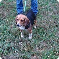 Adopt A Pet :: Mulan - Dumfries, VA