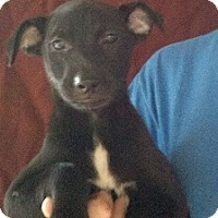 Adopt A Pet :: Amethyst - Oviedo, FL