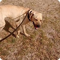 Adopt A Pet :: Bronco - Williston, FL