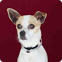 Adopt A Pet :: Molly - San Marcos, CA