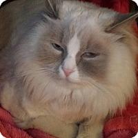 Adopt A Pet :: Hunter - Purebred - Ennis, TX