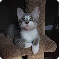 Adopt A Pet :: Cam - Homewood, AL